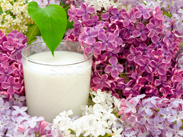 Milk and Lilac Stock photo © SRNR