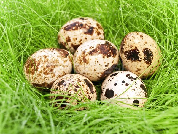 quail eggs Stock photo © SRNR