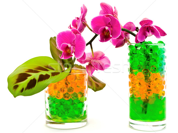 orchid and plants in glass with hydrogel Stock photo © SRNR