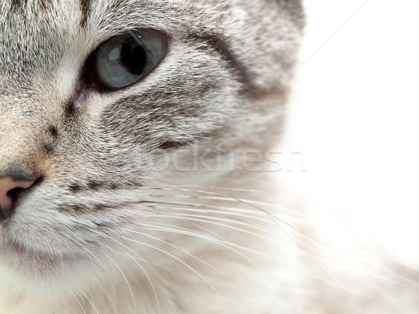 Kat half gezicht witte oog kijken Stockfoto © SRNR