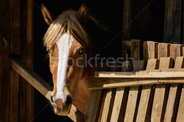 Horse Stock photo © SRNR