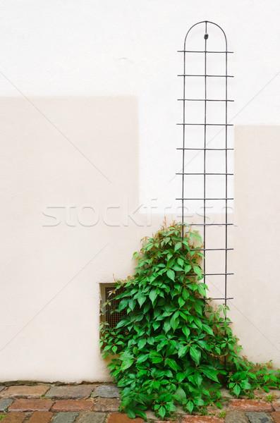 Fiatal borostyán növény ház fal természet Stock fotó © SRNR