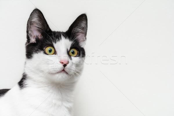 Kitten Stock photo © SRNR