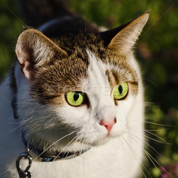 Portrait Of Cat Stock photo © SRNR