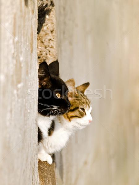 Cats Stock photo © SRNR