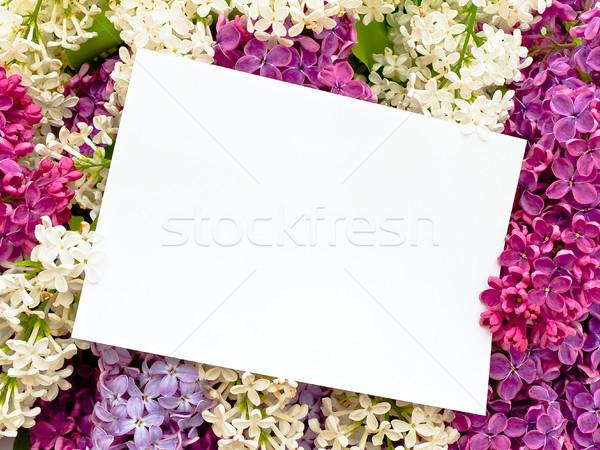 сирень цветок письме завода карт Сток-фото © SRNR