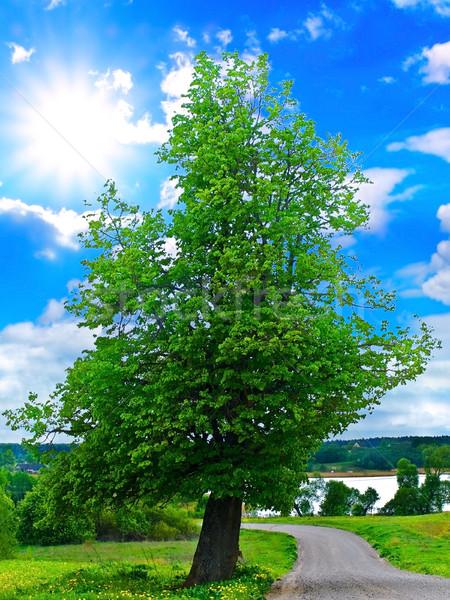 Tree Stock photo © SRNR