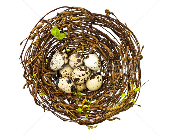 卵 鳥の巣 春 葉 卵 ストックフォト © SRNR