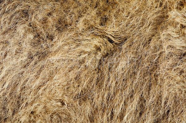 Camelos cabelo camelo lã naturalismo Foto stock © SRNR