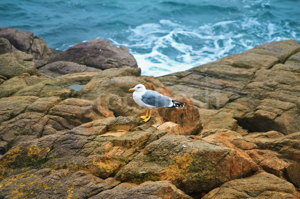 Martı kaya siyah deniz doğa kuş Stok fotoğraf © SRNR