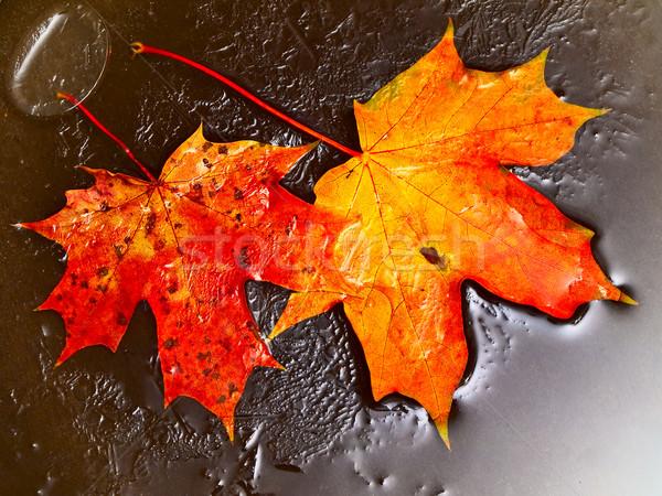 orange maple leaves in ice Stock photo © SRNR