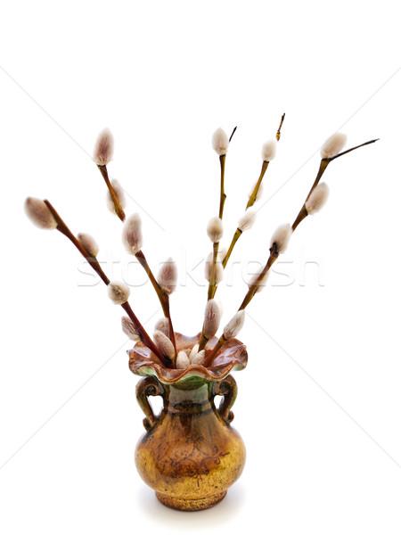 Cono sauce Pascua naturaleza plantas aerosol Foto stock © SRNR