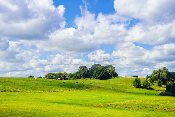 Pasture Land Stock photo © SRNR
