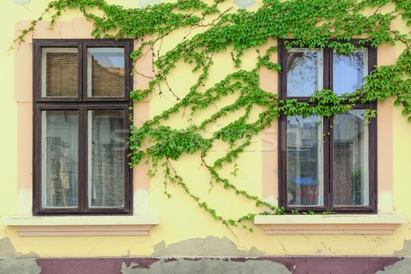 Pencereler duvar kapalı sarmaşık Bina ev Stok fotoğraf © SRNR
