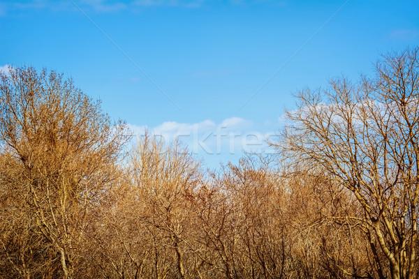 Meztelen fák tél természet ág kint Stock fotó © SRNR