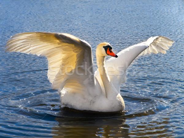 Cisne branco azul água natureza beleza Foto stock © SRNR