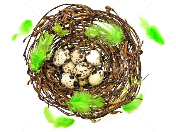 イースター 春 巣 卵 緑 ストックフォト © SRNR