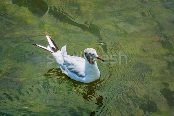 Martı su kuş hayvan çevre dalgalanma Stok fotoğraf © SRNR
