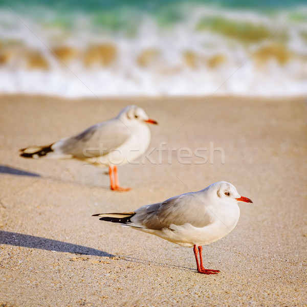 Seagulls on the Sand Stock photo © SRNR