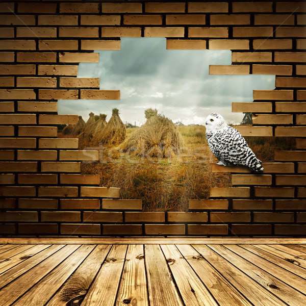 Nature in broken wall Stock photo © SRNR