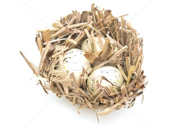鳥の巣 卵 白 ストックフォト © SRNR