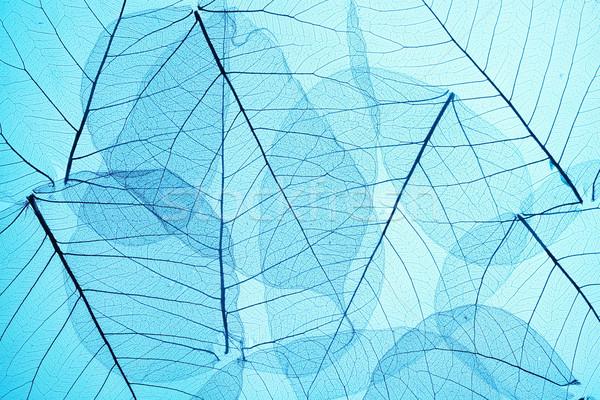 Kék csontváz levelek absztrakt terv levél Stock fotó © SSilver
