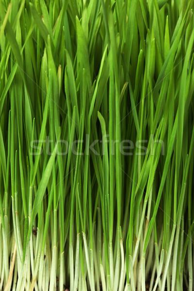 草 自然 背景 フィールド 緑 葉 ストックフォト © SSilver