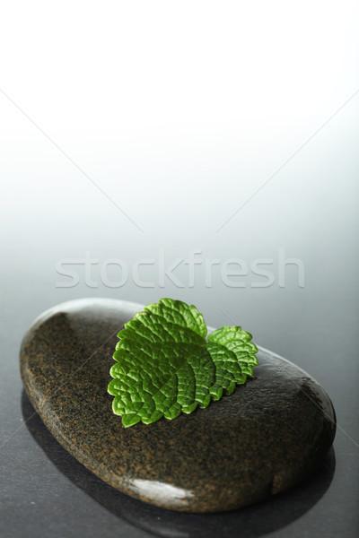 Blad steen schoonheid ruimte groene spa Stockfoto © SSilver