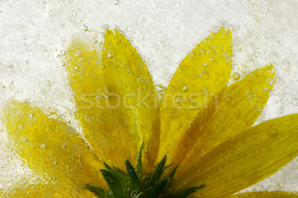 Congelato fiore giallo abstract foglia giardino estate Foto d'archivio © SSilver