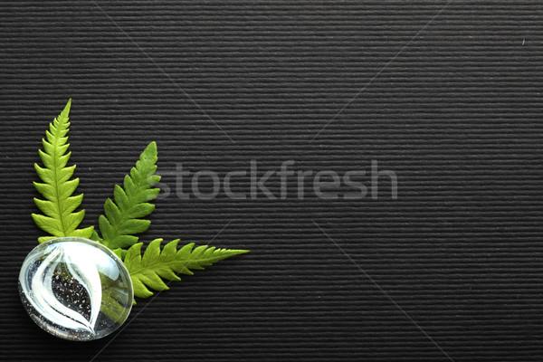 Varen papier gras schoonheid bladeren spa Stockfoto © SSilver