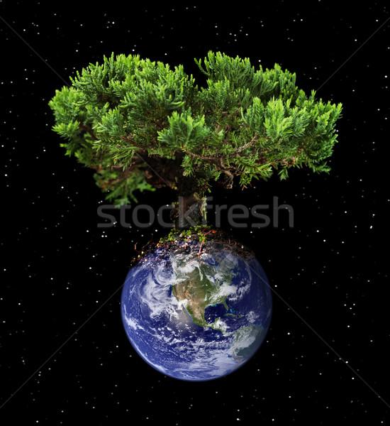 Terra árvore globo espaço azul energia Foto stock © SSilver