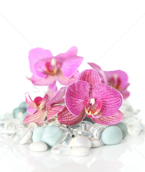 Orkide taşlar sağlık arka plan uzay Stok fotoğraf © SSilver