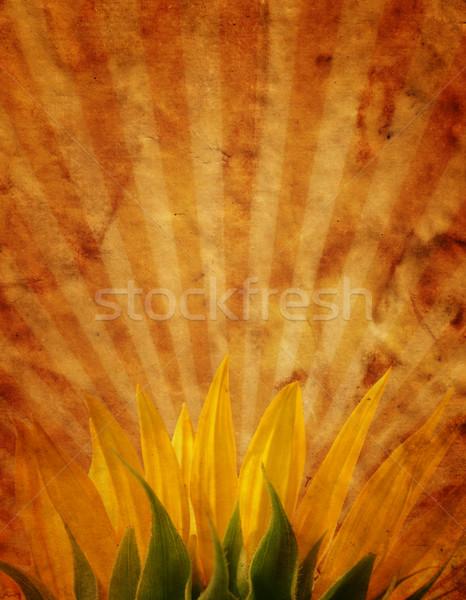 Grunge design girasole fiore estate arancione Foto d'archivio © SSilver