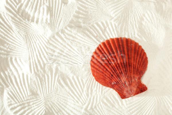 Mar concha vermelho areia natureza fundo Foto stock © SSilver