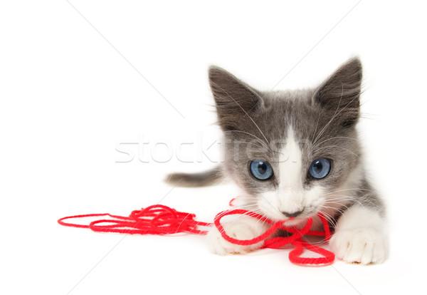 Kedi yavrusu oynama iplik mutlu kedi arka plan Stok fotoğraf © SSilver