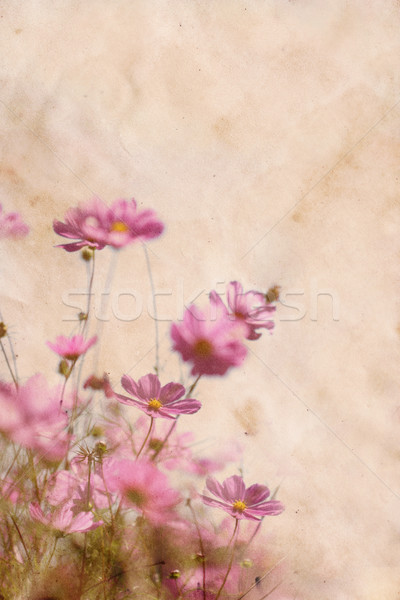 Worn paper texture with flowers Stock photo © SSilver