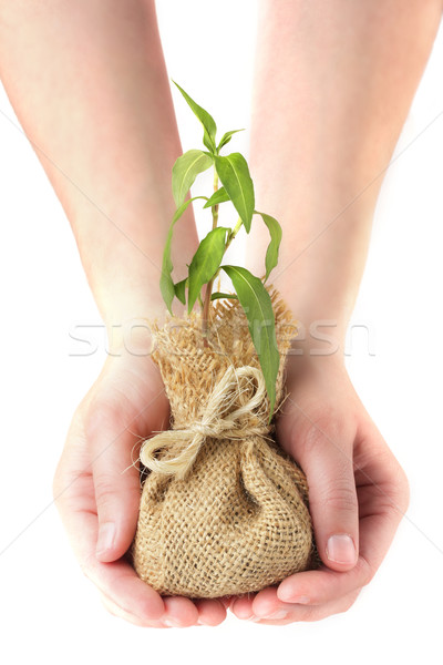 Hands holding young plant Stock photo © SSilver