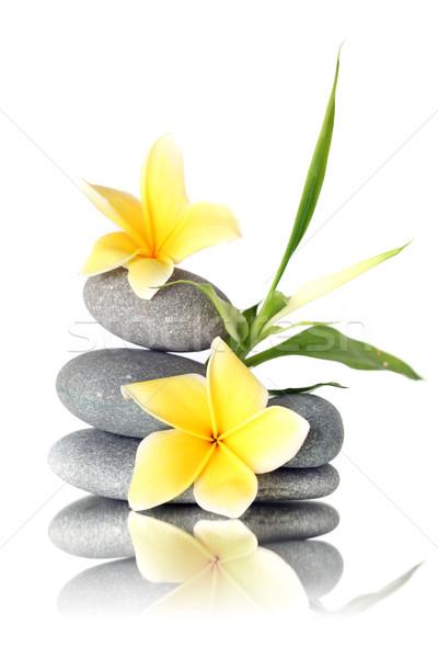 Flores amarelas pedras isolado branco flor Foto stock © SSilver