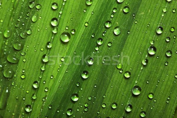 Gotas de água folhas água abstrato luz folha Foto stock © SSilver