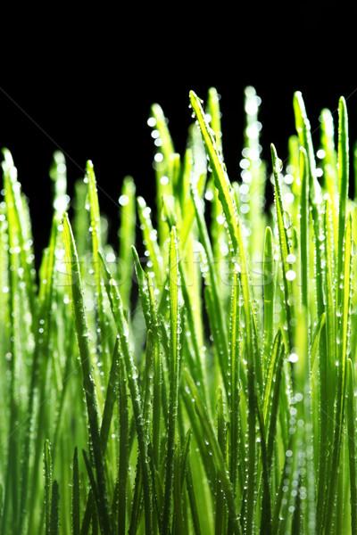 Rocío gotas hierba verde agua textura luz Foto stock © SSilver