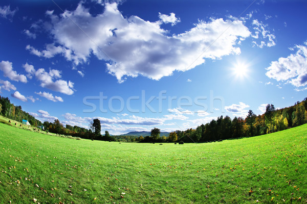 Green pasture and bright blue sky Stock photo © SSilver