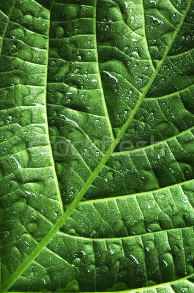Su damlası yaprak su ışık dizayn yeşil Stok fotoğraf © SSilver