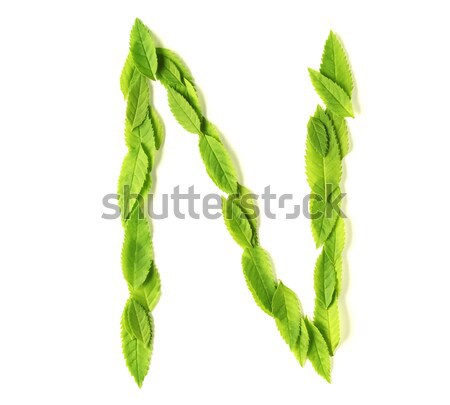 Leaf letters Stock photo © SSilver