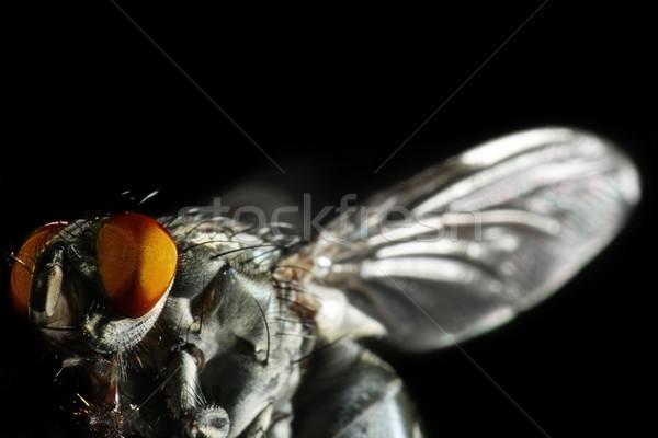 Uçmak doğa siyah kanatlar böcek Stok fotoğraf © SSilver
