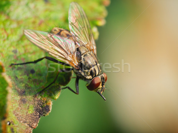 Fly Stock photo © Steevy84