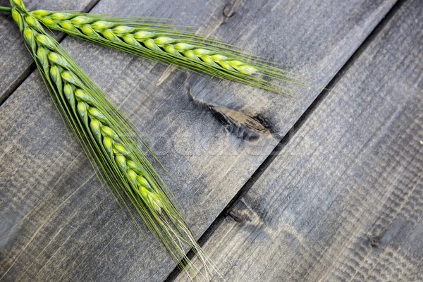 Young wheat ears isolated on a wooden table Stock photo © stefanoventuri