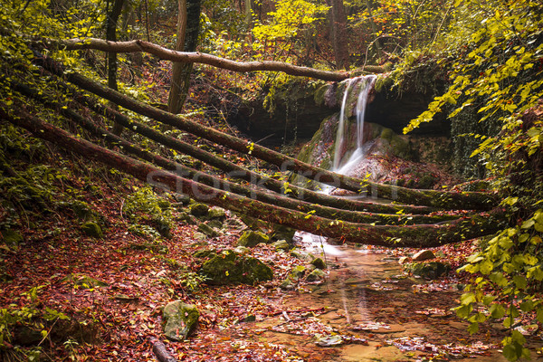 Amazing waterfall in colorful autumn forest - Italy Stock photo © stefanoventuri
