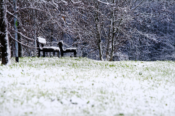 Stock photo: Winter in a park. Isolated benches