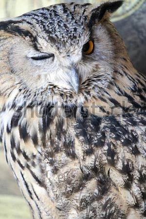 Portrait eagle owl visage orange oiseau nuit Photo stock © stefanoventuri
