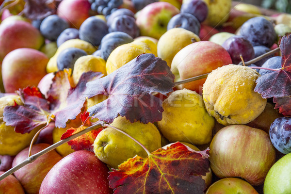 Sonbahar meyve armut elma üzüm hasat Stok fotoğraf © stefanoventuri